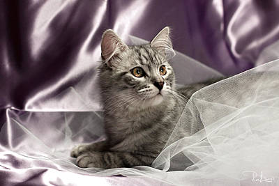 Little Cat On Lilac Poster