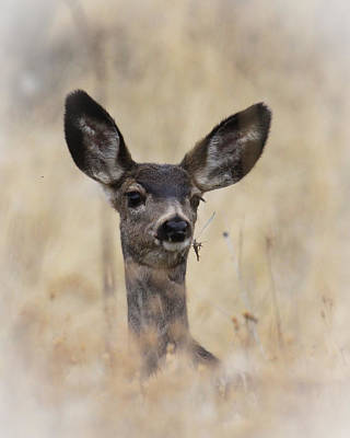 Poster featuring the photograph Little Fawn by Steve McKinzie