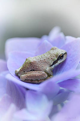 Little Frog On Hydrangea Flower Poster by Jennie Marie Schell