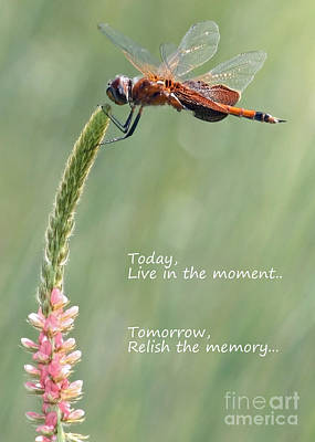Live In The Moment  Poster by Carol Groenen