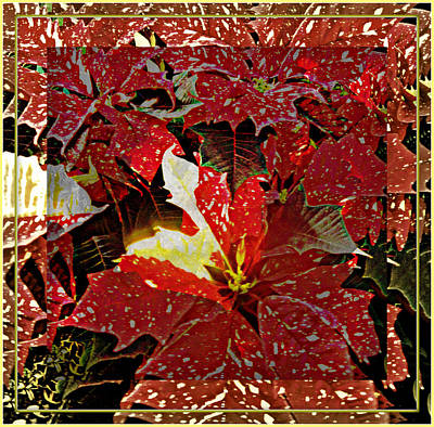 Living Light Of Poinsettias  Poster