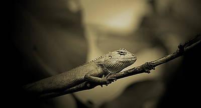 Poster featuring the photograph Lizard by Arik S Mintorogo