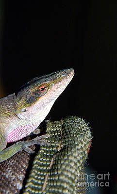 Poster featuring the photograph Lizard by Ester  Rogers