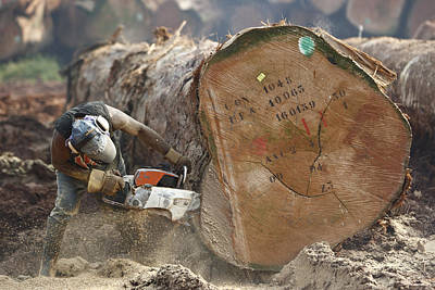Logger Cutting Trunk Of Rainforest Poster