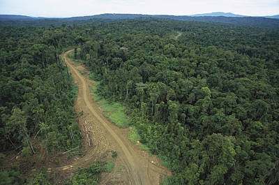 Logging Road In Lowland Tropical Poster