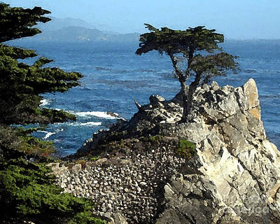 Lone Cypress Tree Poster