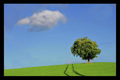 Lonely Tree Against Blue Sky Poster by Ernie Watchorn