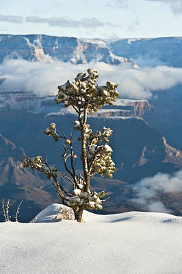 Lonely Tree Over The Grand Canyon Poster