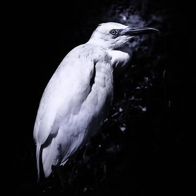 Lonesome Egret Poster