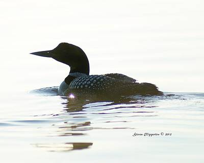 Poster featuring the photograph Loon 3 by Steven Clipperton