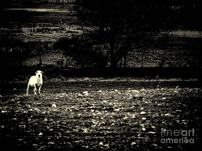 Lost Lamb Poster by Joe Jake Pratt