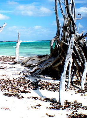 Poster featuring the photograph Cozumel Mexico  Paradise On Earth by Danielle  Parent