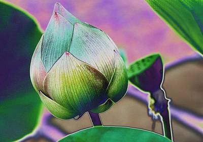Lotus Dreaming 7 Poster