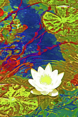 Lotus Poster by James Mancini Heath