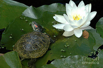 Lounging On A Lily Pad Poster by Tonia Noelle