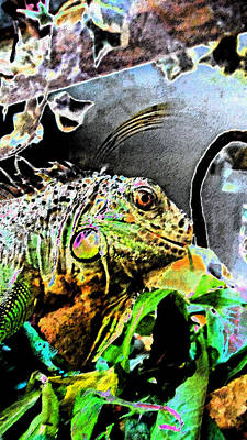 Lucy The Iguana Poster