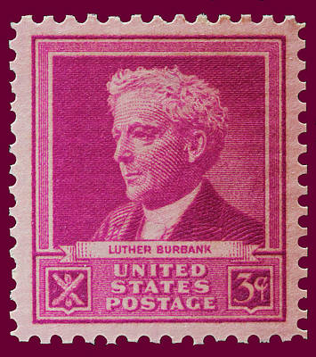 Luther Burbank Postage Stamp Poster by James Hill