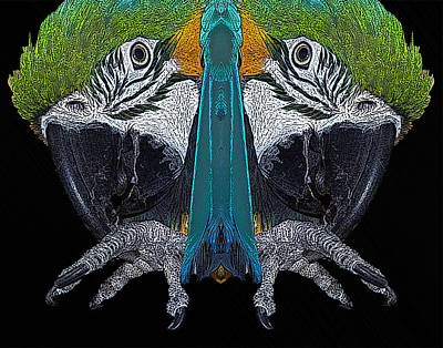 Macaw Poster by Ernie Echols