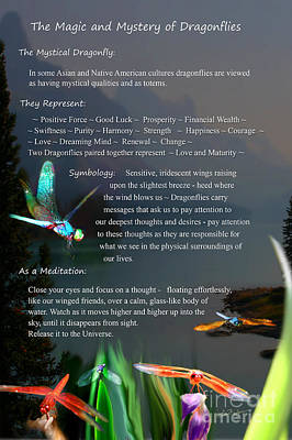 Magic And Mystery Of Dragonflies Poster