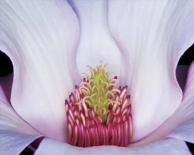 Magnolia Impression Number 2 Poster