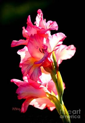 Majestic Gladiolus Poster
