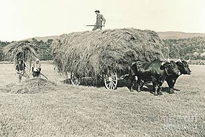Making Hay While The Sun Shines 1903 Poster by Padre Art