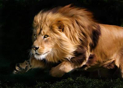 Male Lion Hunting Poster by Julie L Hoddinott