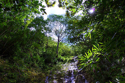 Manoa Rainforest Skylight Poster by Kevin Smith