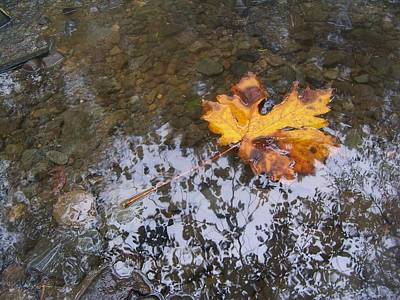 Maple Leaf Reflection 3 Poster by Peter Mooyman