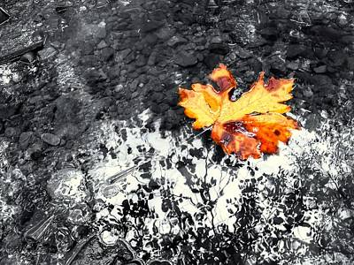 Maple Leaf Selective Color Poster by Peter Mooyman