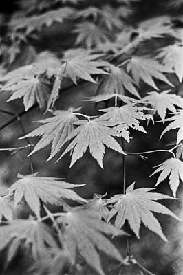 Maple Leaves In Seoul Poster by Julie VanDore