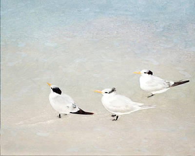 Marco Trio Poster by Karen Lynch