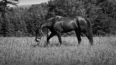 Poster featuring the photograph Mare In Field by Davandra Cribbie