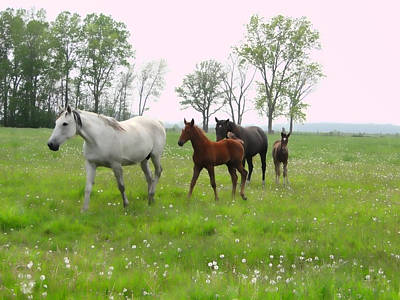 Mares And Foals In Dandelions Poster