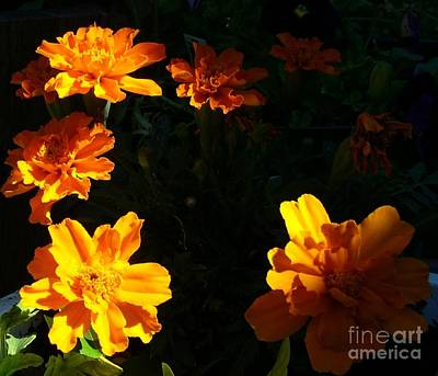Poster featuring the photograph Marigold Sunrise by Jim Sauchyn
