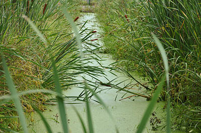 Marsh-field Ma Poster by Christine Stonebridge