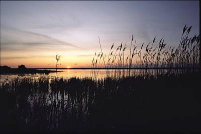 Marsh Grasses And Sunset Poster by Medford Taylor