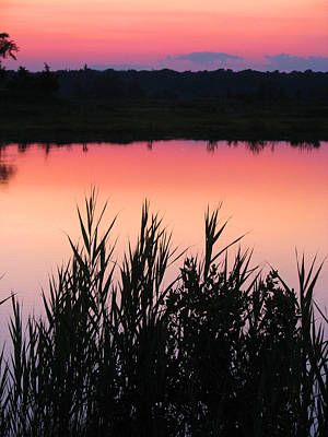Poster featuring the photograph Marsh Sunset by Clara Sue Beym