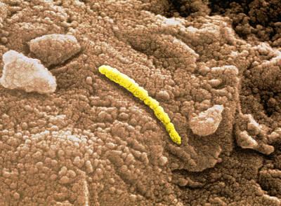Martian Microfossil, Sem Poster by Nasa