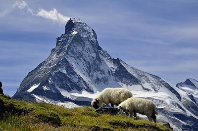 Matterhorn With Sheep From Hohbalmen Poster by Pierre Hanquin Photographie