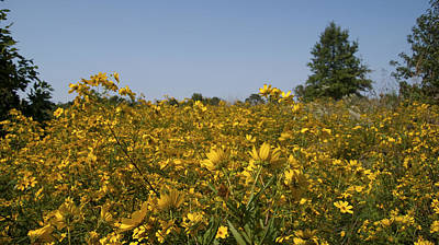 Meadow At Terapin Park Poster
