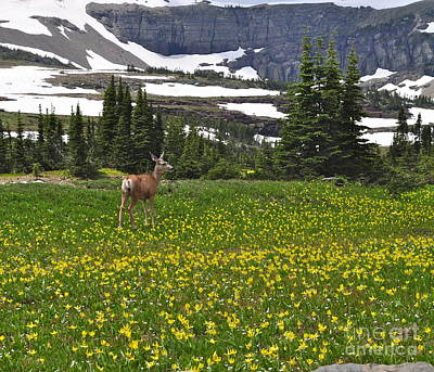 Poster featuring the photograph Meadow Deer by Johanne Peale