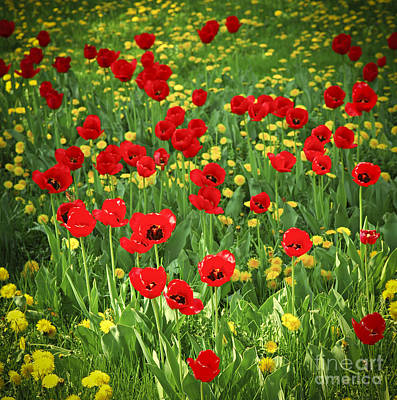 Meadow With Tulips Poster