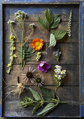 Medicinal Healing Herbs And Flowers Poster