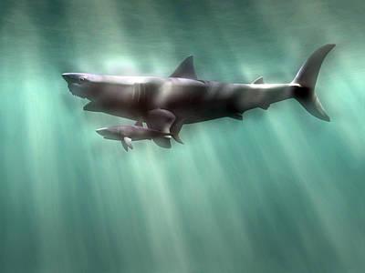 Megalodon Shark And Great White Poster