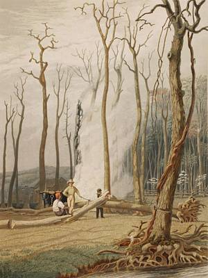 Men Cutting And Burning Girdled Tree Poster