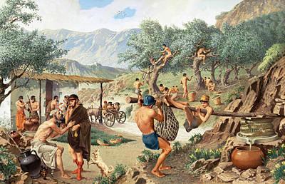 Men Harvest Olives And Press Poster by H.M. Herget