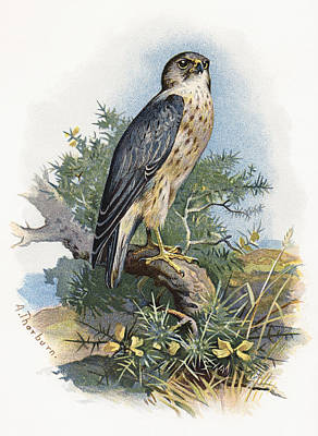 Merlin, Historical Artwork Poster by Sheila Terry