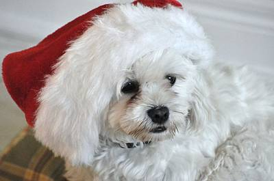 Santa's Hat Poster