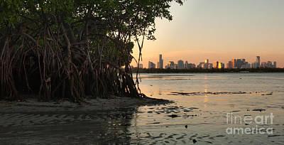 Miami With Mangroves Poster by Matt Tilghman